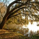 serene photo of tree over lake alice